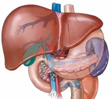 karaciğer enzimlerini nasıl düşer