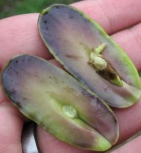 dikotiledon bitkilerin genel özellikleri