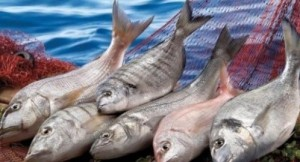 Taze balık nasıl seçilir