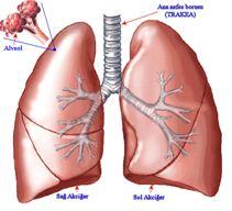 Akciğer-anatomisi-