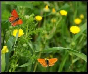 Bitki ve hayvanların canlılık özellikleri