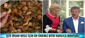 Ahmet Maranki Kanlıca Mantarının yararları