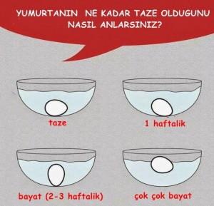 yumurta (1)