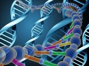 DNA Testini Kimler Yaptırabilir?
