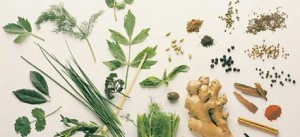aromatik_bitkiler