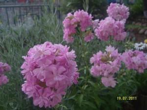 Bronşite iyi gelen bitkiler