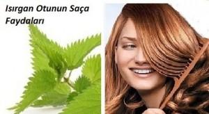 Parlak saçlar için ısırgan suyu