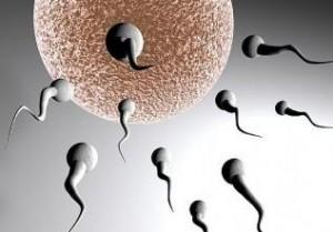 Kısırlık, sperm eksikliği için kür tarifi