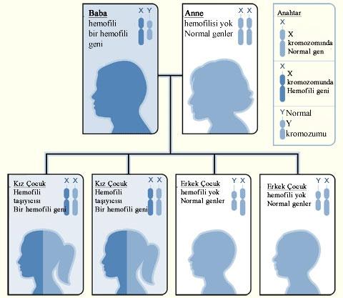Hemofili baba