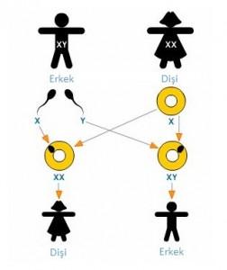 Modern genetik uygulamaları