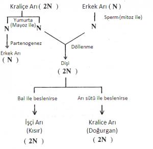 modern-genetik-uygulamalari-2