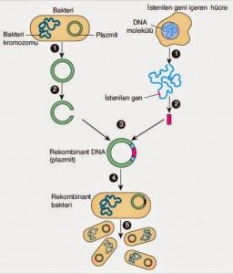 modern-genetik-uygulamalari-4