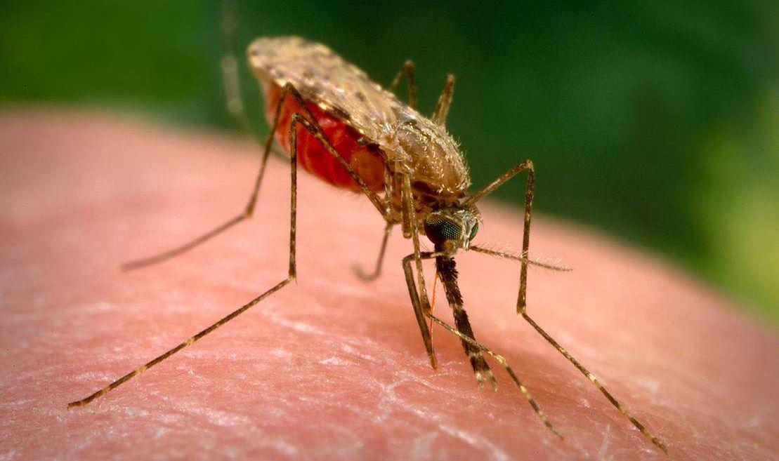 Sivrisinek Isırığına Ne İyi Gelir?