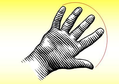 Parmak Uzunluğu Sosyal Davranışı Etkiliyor