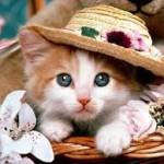 Kedi Beslemek ve Faydaları