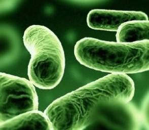 Mikroskobik canlılar boşaltım yapar mı?