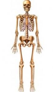 Kemik ve kas sağlığımızı korumak için neler yapmalıyız