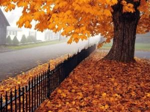 Ağaçların Yaprak Dökmesinin Faydaları