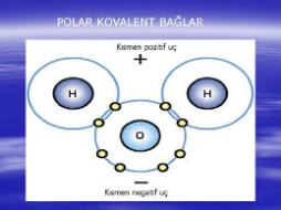 polar-kovalent-bag