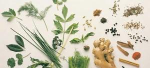 Çocuklarda tıbbi amaçla kullanılan bitkiler