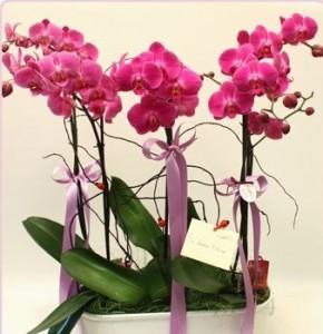 Evde Orkide Bakımı Nasıl Olmalıdır?