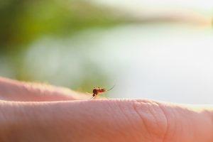 Sivri Sineklerden Doğal Korunma Yolları